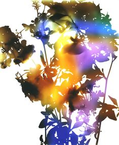 James Welling - Flower 29. Going to DIY somehow... either by using scanner on real flowers and then manipulating the colors of the silhouette in photoshop, or by painting a canvas multiple colors and then using a stencil or leaves etc, to leave/create a silhouette.