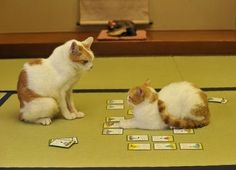 Cat playing card game