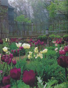 tulip season...