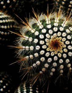 Cactus ~ Detail