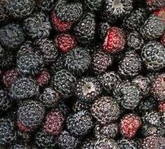 Black Raspberries are an exceptional berry that contain a powerful antioxidant known as ellagic acid. Ellagic acid is a potent anti-cancer, anti-tumor, anti-viral, and anti-bacterial compound. Due to their high concentration of ellagic acid, black raspberries have the potential to aid in the prevention of several forms of cancer including esophageal, colon, breast, lung, skin, and prostate cancer.