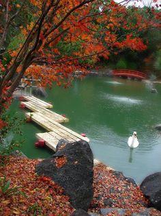 autumn, Lake Auburn Botanical Gardens, New South Wales, Australia   Louise Docker via Flickr via Wikimedia Commons