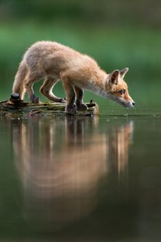 Precious! Thirsty by Jan Pelcman on 500px