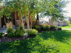 river birch tree front landscaping | The stands of birch trees are the stars in this front yard garden bed ...