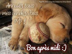 Annulez tous mes rendez vous svp ! Bon après midi :) #bonapresmidi chien chiot repos sommeil baseball