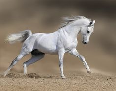 Beautiful Horse repinned by EQUESTRIAN DIVA COUTURE