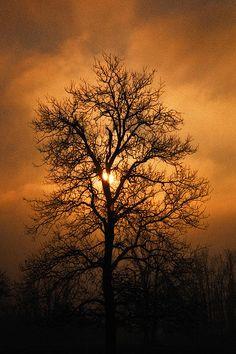 ✮ Oak Tree at Sunrise