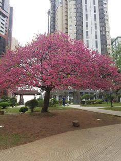 Praça Japão em Curitiba 2016
