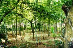 Pastoral bamboo park