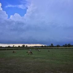 A photo we caught on a Friday afternoon as a storm was rolling over Blenheim Road. 🐴☁️🌿