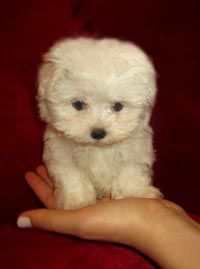 OH MY GOSH I NEED THIS!!!!! I would die if I ever came home and this wittle baby was awaiting me! So precious!