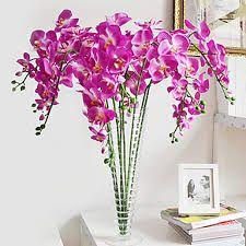 Kuvahaun tulos haulle violetti väri