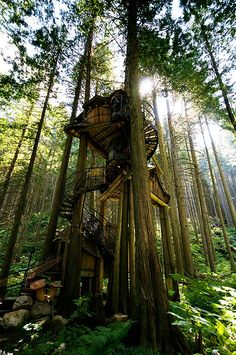 the enchanted forest tree house. One day, My children, will have a super awesome tree house and it will be the best tree house on the block! Cool Tree Houses, Amazing Houses, Unusual Houses, Awesome House, In The Tree, 10 Tree, My Dream Home, Dream Big, The Great Outdoors