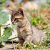 What Happens to Stray Cats?  http://petlvr.com/blog/2012/03/27/what-happens-to-stray-cats/
