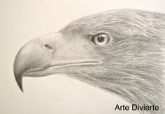Cómo dibujar una cabeza de águila - Cómo dibujar texturas  Mira el video:  http://youtu.be/devWKjmhM78  #arte #artedivierte #dibujo #cabezadeaguila #texturas