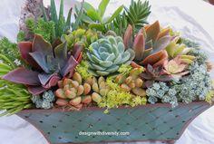 Beautiful and colorful succulent arrangement.