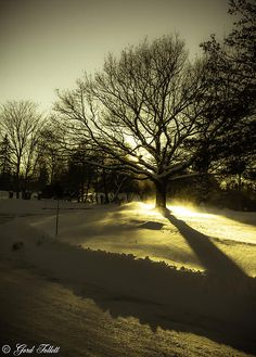 A golden dusk at Bowring Park #newfoundland #photography