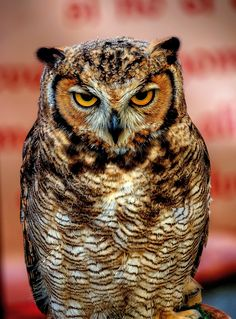 Buho  by JOSEP MATAMALA, via 500px #owl