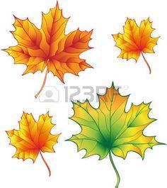 hojas de otoño dibujo: un conjunto de hojas de arce