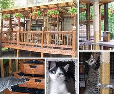 139 Best Catio Images Dog Cat Pets Cat Supplies
