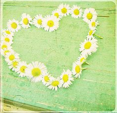 Daisy with Love Happy Flowers, Pretty Flowers, Green Flowers, I Love Heart, My Heart, Heart Chain, Wedding Flower Inspiration, Wedding Flowers, Daisy Wedding
