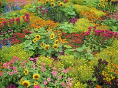English Garden. This is what my next door neighbor's garden, on Whidbey, looked like - only more so. We could see it from our back deck and Pearl was always telling me to come over and pick a bouquet. Ric and Pearl were wonderful neighbors.