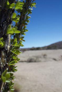 Still standing in the desert