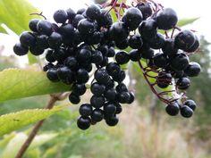 Svarthyll Frisk, Pepper, Juice, Planters, Garden, Recipes, Food, Lawn And Garden, Juice Fast