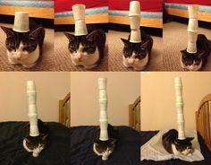 Cat stack fever