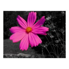 Search for customizable Black posters & photo prints from Zazzle. Check out all of the spectacular designs or make your own! Make Your Own Poster, Modern Artwork, Tool Design, Vintage Designs, Pink Flowers, Free Design, Poster Prints, Black And White, Plants