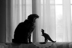 Chat contre Dinosaure.