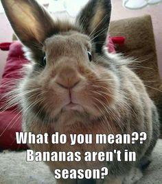Bananas are ALWAYS in season! (01/12/19) Rabbit Life, Rabbit Food, House Rabbit, Animals Beautiful, Cute Animals, Baby Animals, Funny Animals, Animals And Pets, Funny Bunnies