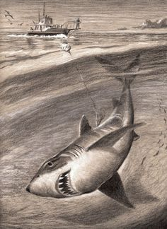 The Great White Shark Jaws 8 1/2 x 11 Cottage Décor Pencil Drawing Fish Art print by Barry Singer. Now considered one of the greatest films ever made, Jaws, ( 1975 ) became the highest-grossing film of all time until the release of Star Wars (1977). Jaws is a American thriller film directed by Steven Spielberg and based on Peter Benchley's 1974 novel of the same name. The prototypical summer blockbuster, its release is regarded as a watershed moment in motion picture history. In the story…