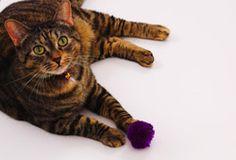 Cats - Activities & Fun
