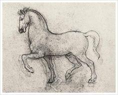 Study of a Horse,  Leonardo Da Vinci
