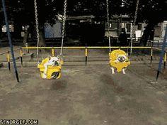 french bulldog GIFs on GIPHY
