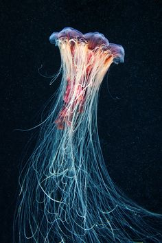 Jellyfish Madness photography by Alexander Semenov.