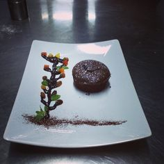 Tree of chocolate is what needed to have roots in life