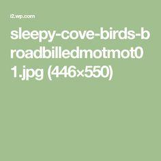 sleepy-cove-birds-broadbilledmotmot01.jpg (446×550)