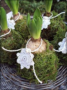 by Sofias Bod Christmas Garden, Christmas Flowers, White Christmas, Christmas Time, Christmas Decorations, Christmas Ornaments, Deco Nature, Holiday Crafts, Holiday Decor