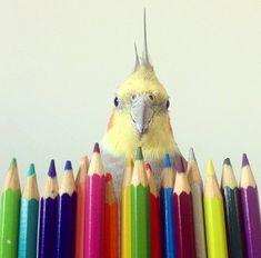 Colorful cockatiel! :)