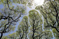 Les arbres de la Plaza San Martin, à Buenos Aires en Argentine - Crédit photo: Refractor - Flickr - next picture
