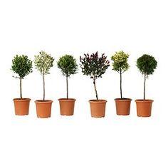Pots et plantes d'extérieur - Plantes - IKEA