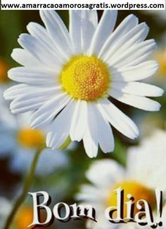 Good Morning People, Good Morning Quotes, Daisy Love, Sweetest Day, Lily, Messages, Flowers, Instagram, Nova