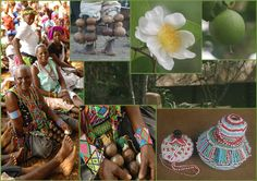 """Chilo Gorge Gardens and the """"snuff box"""" plant-Oncoba spinosa Straw Bag, Safari, Community, Culture, Fruit, Box, Plants, Snare Drum, Boxes"""