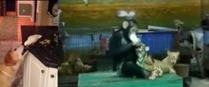 Vídeo fofo traz vários animais cuidando uns dos outros