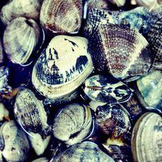 clams photo by happymundane on Instagram