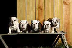 Sometimes you just have to get all your bullies in row :)
