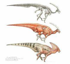 Parasaurolophus study by Terryl Whitlatch… Dinosaur Images, Dinosaur Art, Dinosaur Fossils, Prehistoric Dinosaurs, Prehistoric Creatures, Creature Concept Art, Creature Design, Terryl Whitlatch, Dinosaur Illustration