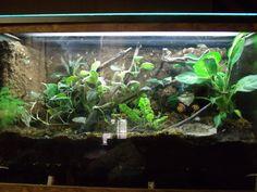 TheHydra.net • View topic - 125 gallon white's tree frog paludarium